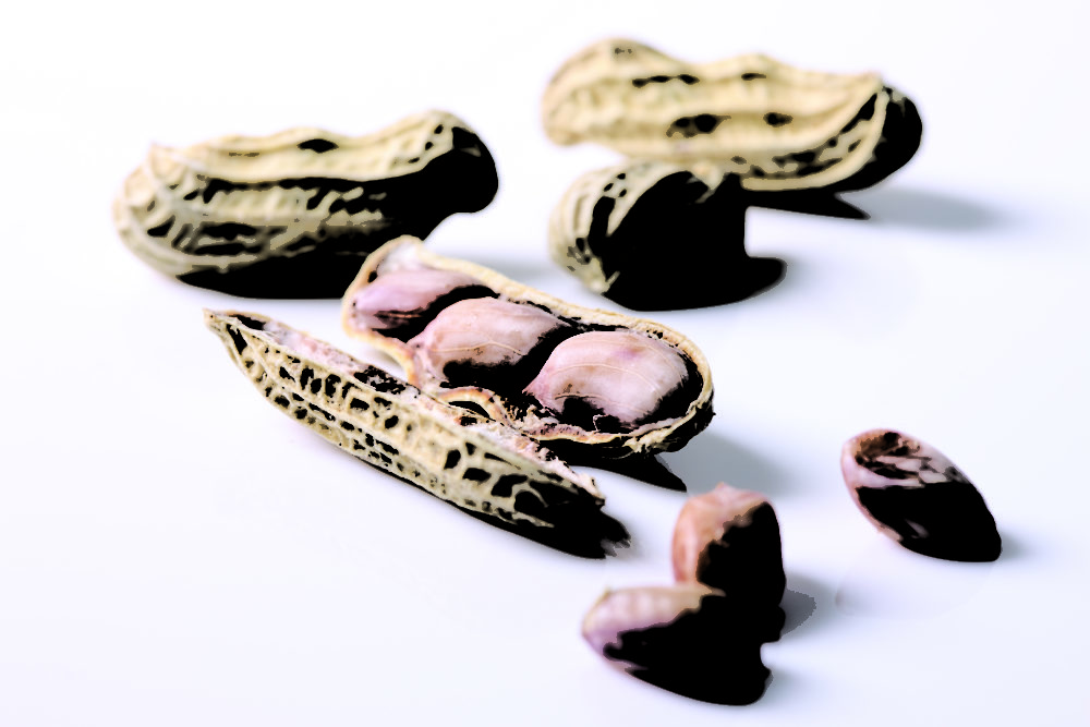 Behandlung einer Erdnussallergie mit einem Probiotikum
