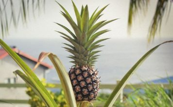 Bromelain aus der Ananas