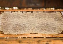 Honig gegen Asthma