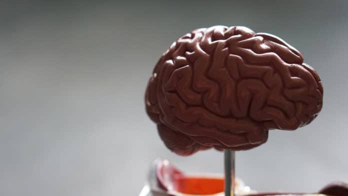 Die passende Ernährung erhöht die Leistungskraft unseres Gehirns