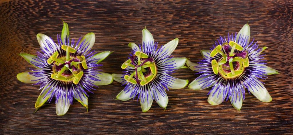 Passiflora Extrakt